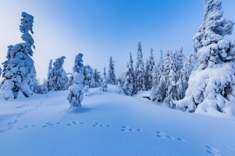 Snow Trees Winter Finland Nature Wallpaper Download Hd For Desktop -  3000x2000