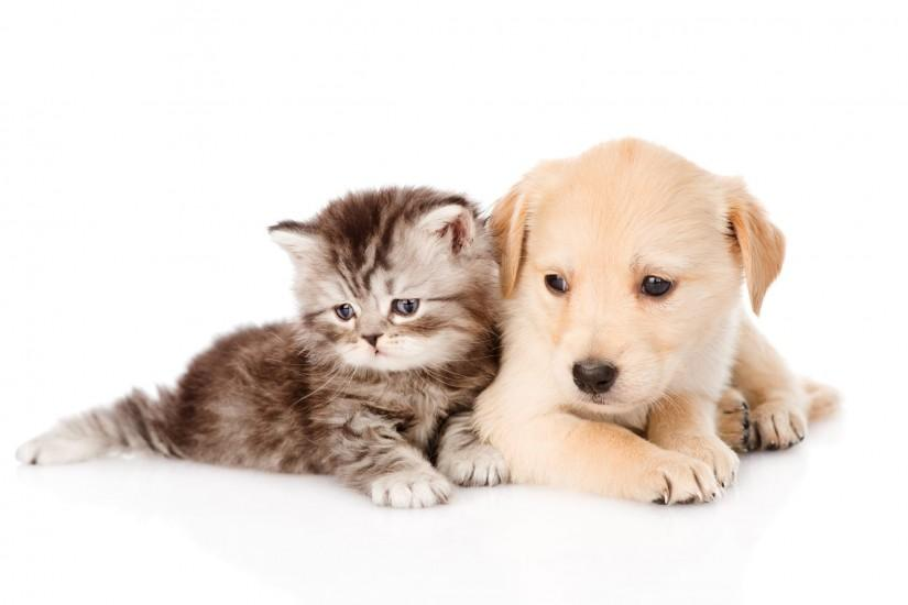 Cute Dog and Cat Backgrounds HD