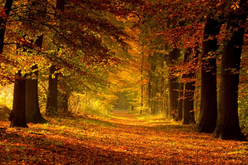 earth autumn Wallpaper Backgrounds