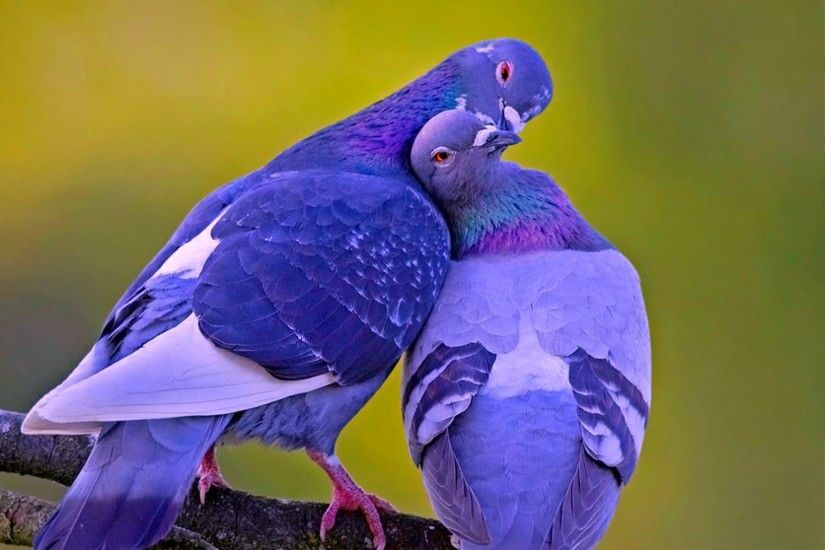 Love Birds Wallpapers Android Apps on Google Play 2560×1600
