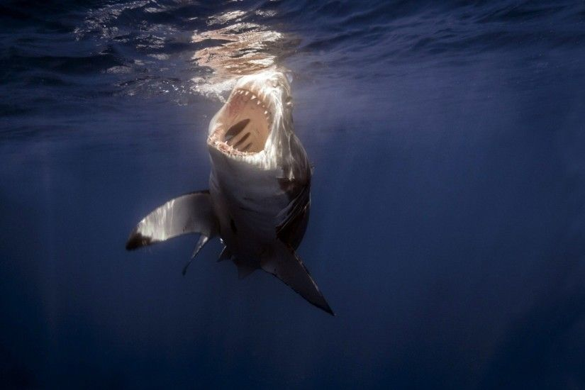 Preview wallpaper shark, sea, under water, teeth 2048x1152