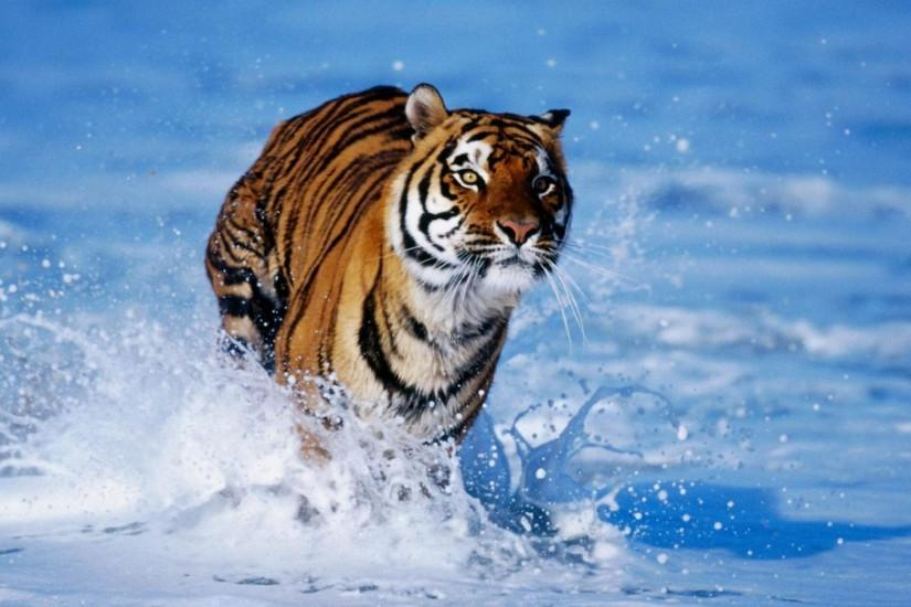Wild Animal HD Wallpapers