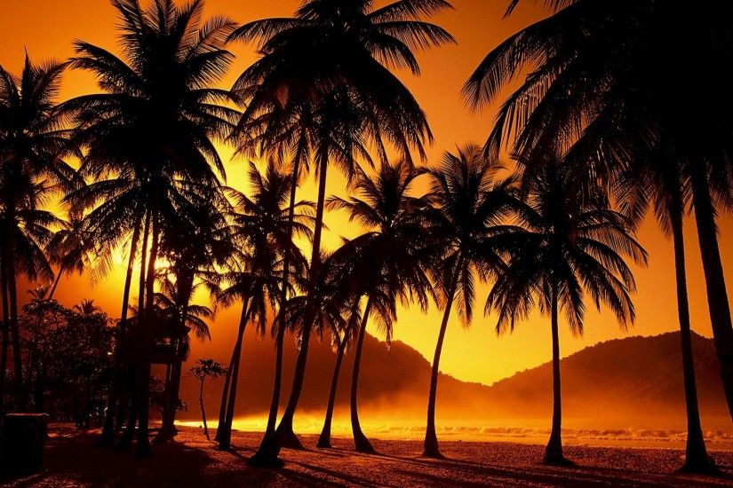 Sunset Wall Mural From Scarfacesunset palm trees wallpaper jnsrmgksb i  journal