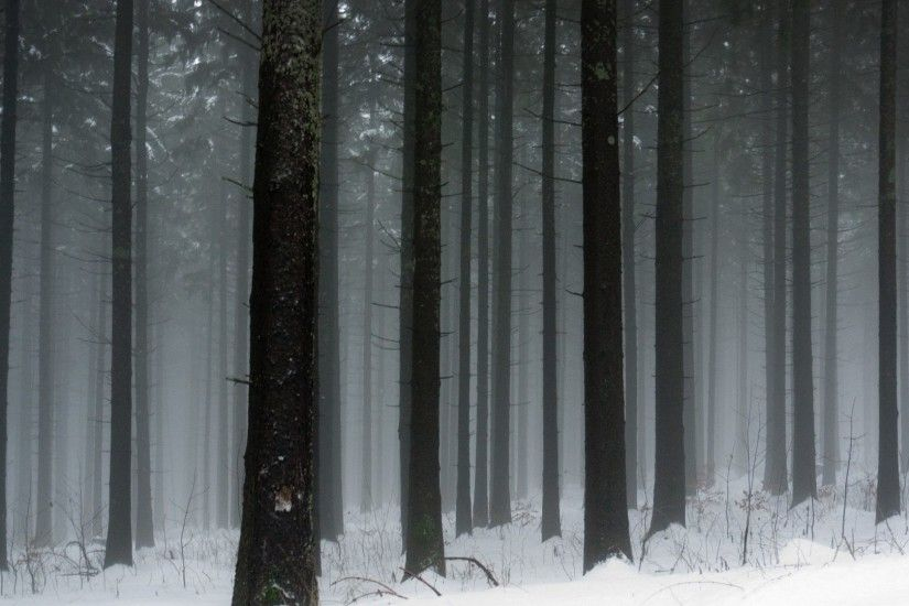 Trees - Forest Snowy Nature Wallpapers Hd Ipad for HD 16:9 High Definition  1080p