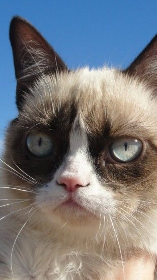 Preview wallpaper grumpy cat, cat, dissatisfied 1080x1920
