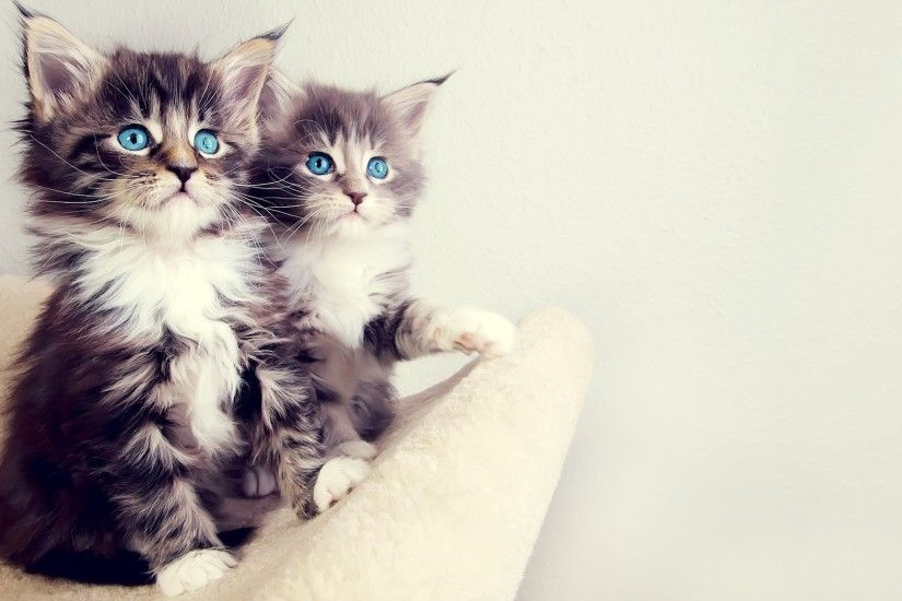 ... Fluffy Kitten Wallpapers Hd Free Download > SubWallpaper Cute ...