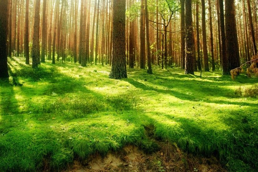 Beautiful Forest Green Wallpaper HD