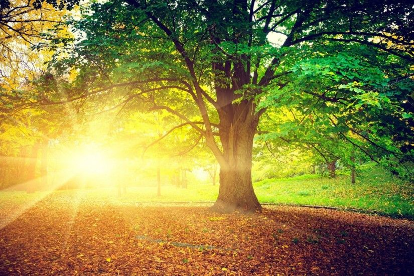 nature tree leaves sun rays bright autumn day treem leaves background  wallpaper widescreen full screen hd