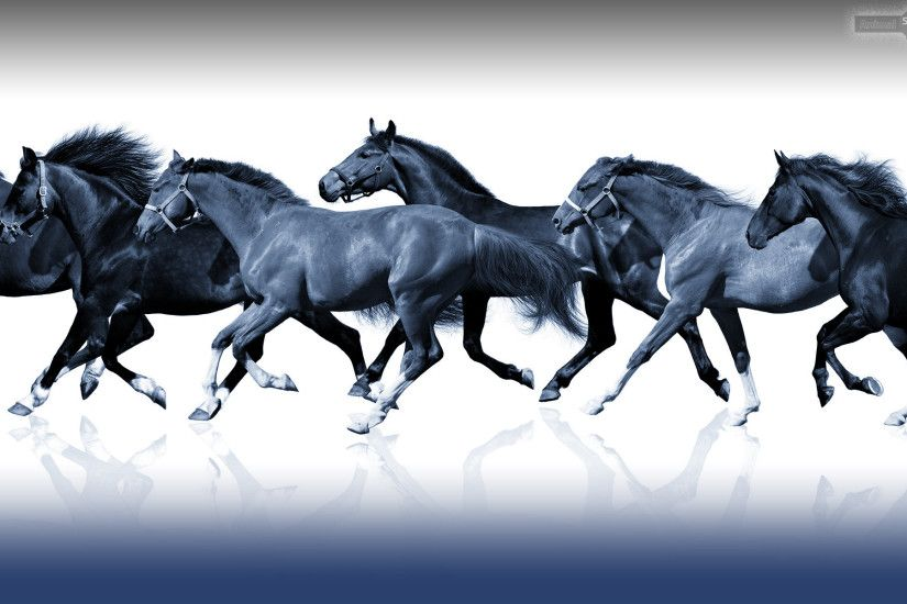 Best Horse Wallpapers and Backgrounds