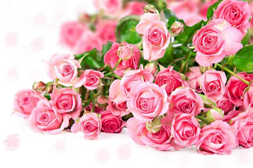 Pink Flower Backgrounds