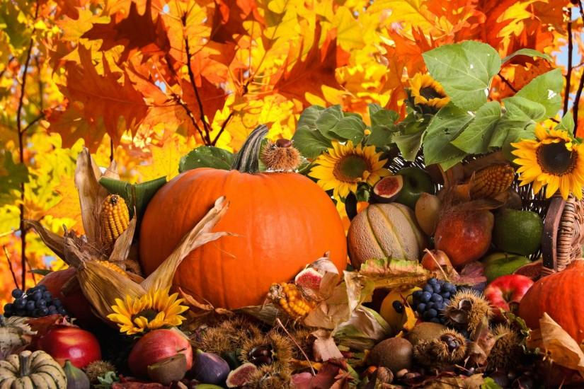 Autumn harvest wallpaper - Holiday wallpapers - #23575