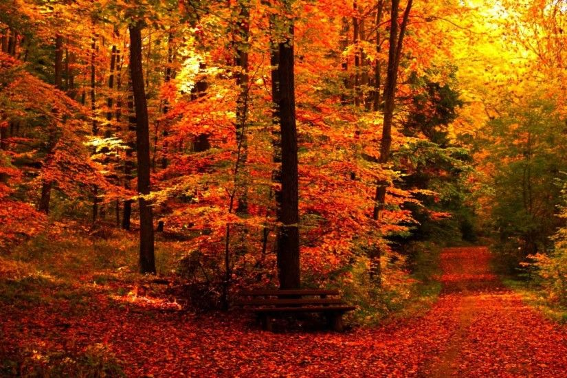 Leaves Forest Season Landscape Seasons Leaf Fall Nature Tree Autumn Color  Desktop Backgrounds Free