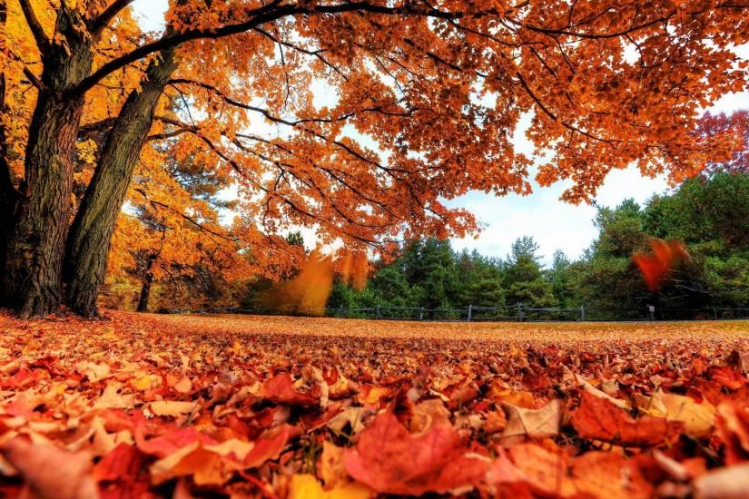 Wallpapers For > Autumn Leaves Background Music
