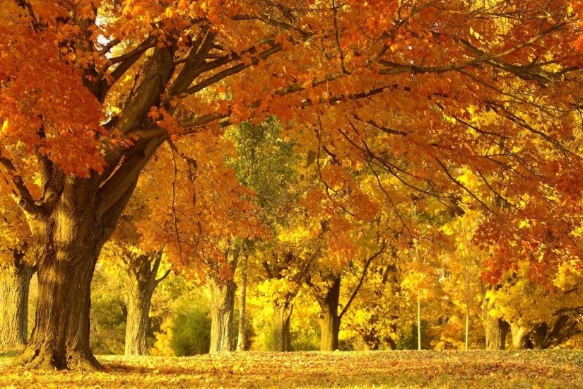 3840x2160 Wallpaper fall, trees, leaves, foliage