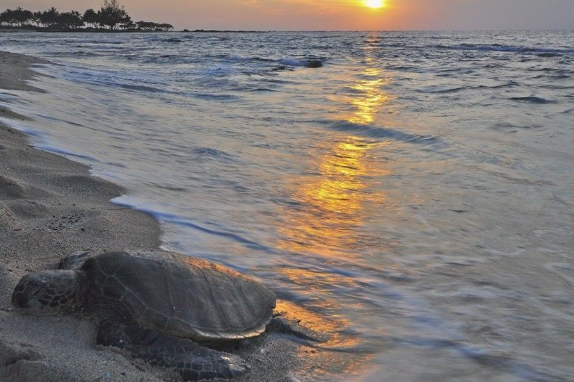 Hawaiian Tag - Ocean Honu Polynesian Polynesia Island Sand Evening Hawaiian  Turtle Pacific Leatherback Sun Set