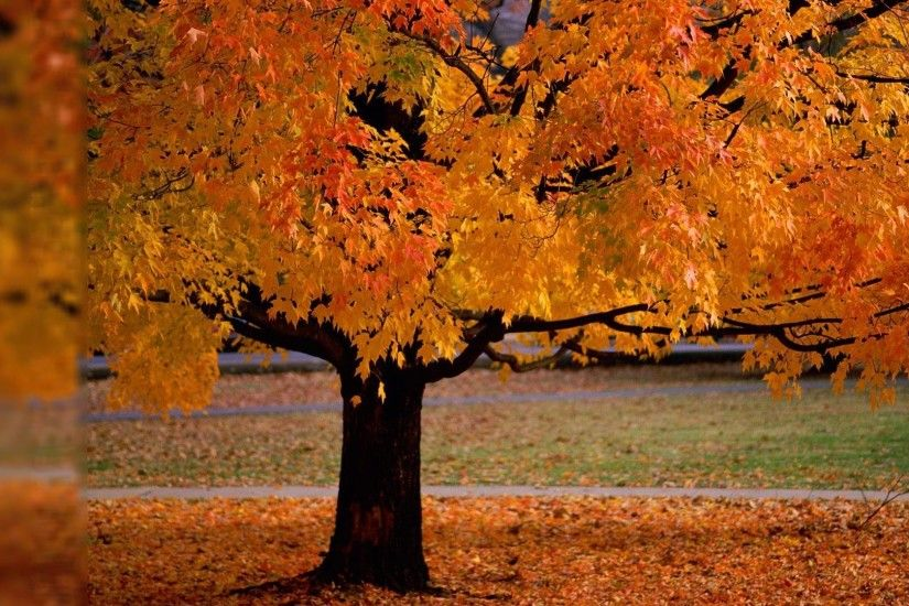 Autumn Desktop Backgrounds Wallpaper 1920x1080PX ~ Wallpaper Fall .