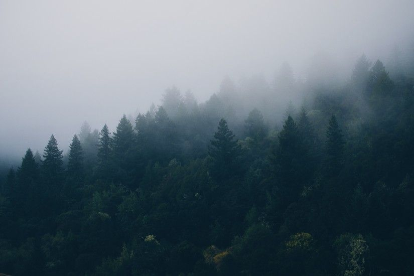 Preview wallpaper forest, trees, fog 2560x1600