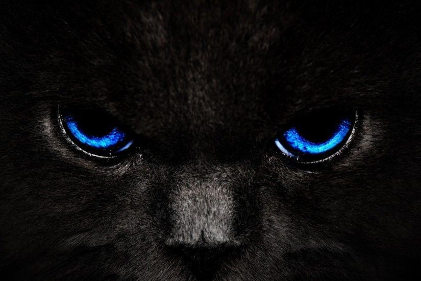 Black Cat's Eyes Wallpaper HD