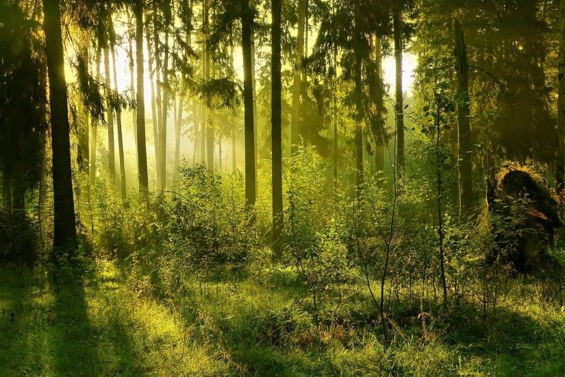 Forest Backgrounds Pictures (70 Wallpapers)