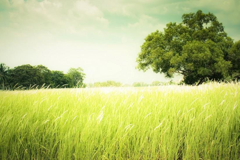 download grass wallpaper 2560x1600 for ipad