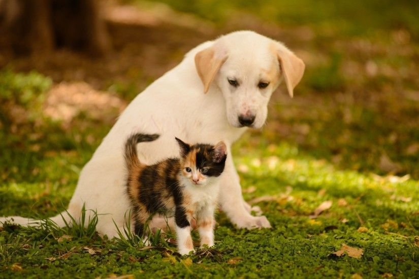 puppy-and-kitten-1080p-high-quality-puppy-and-