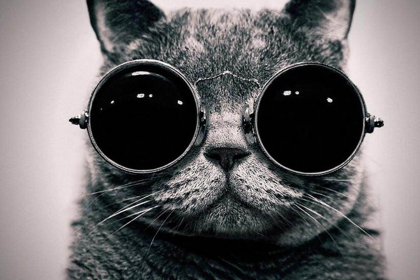Lsd Free Trippy Cats Animals Glasses Sunglasses Hippie Wallpaper
