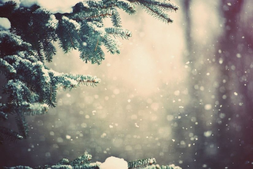 Preview wallpaper winter, spruce, branches, snow, glare 2560x1440