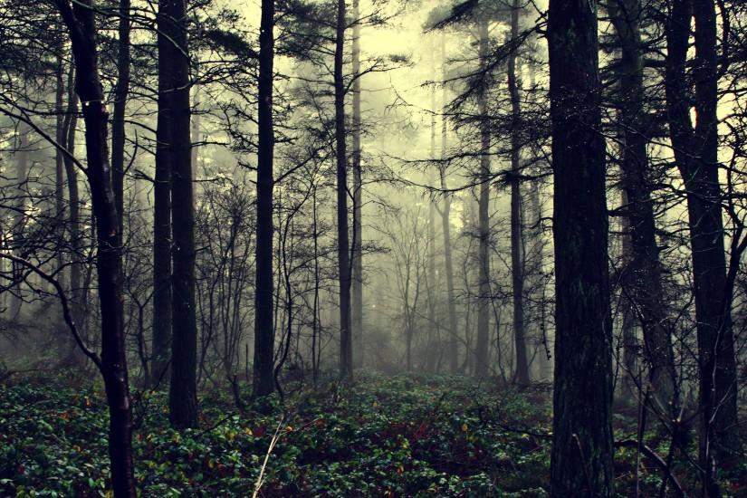 dark forest background 2560x1600 laptop
