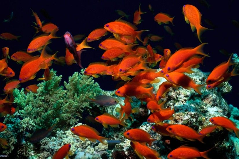 Underwater, Fish, Corals, Red Fish, Tropical Fish, Sea Fish, Underwater