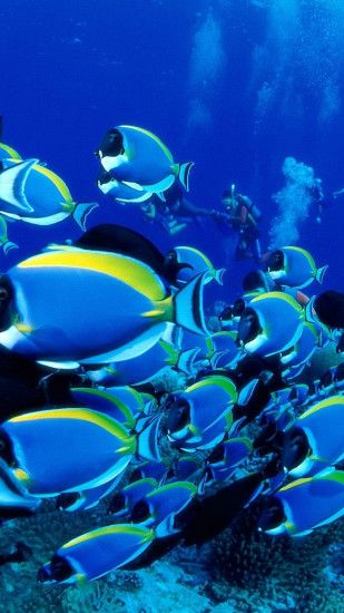 Preview wallpaper ocean, fish, set, underwater world 1440x2560