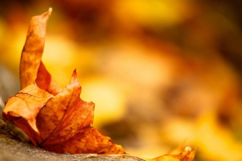 Download Fall Autumn Season Wallpaper Nature Background Full Size