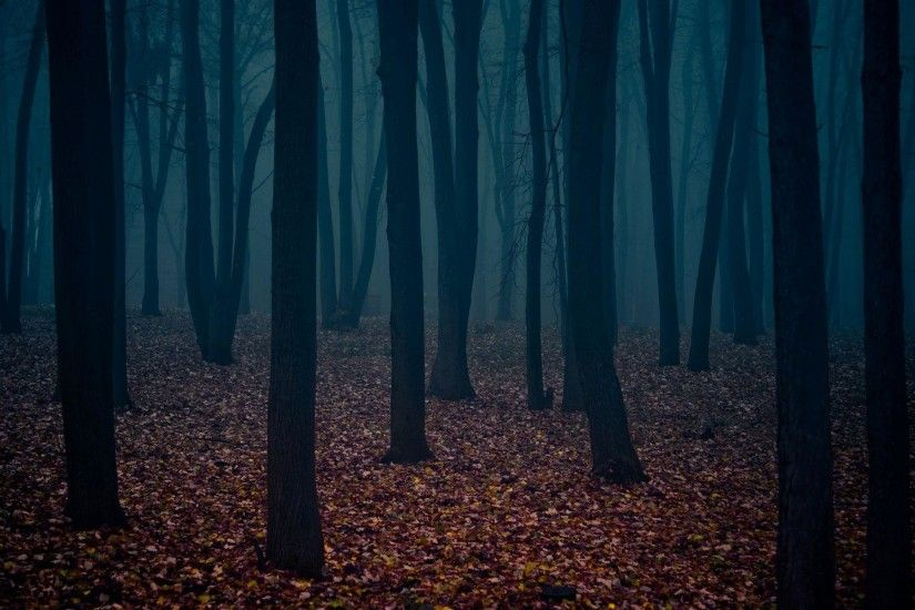 Dark-Woods-Desktop-Background