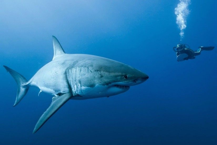 Photo Collection Wallpaper Shark Fish Animals Discovery Channels Shark Week  2017 - http://ift.tt/2tF7KuE For ...