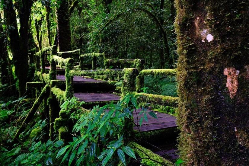 Path Rainforest Thailand Nature Wallpaper Background