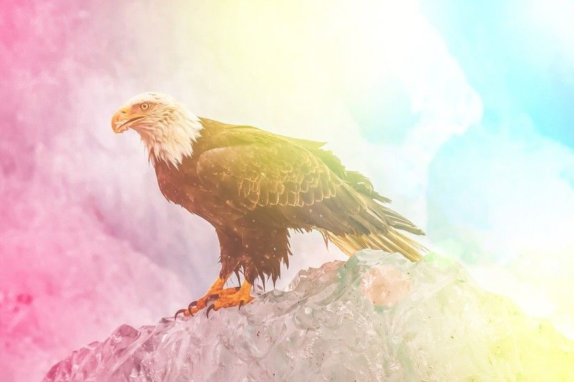 colorful, Edited, Eagle, Animals, Wildlife, Bald Eagle Wallpaper HD