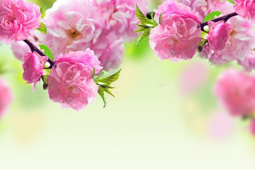 Flowers-Pink-Spring-Wallpaper.jpg 1,920×1,080 pixels Pink Wallpaper,