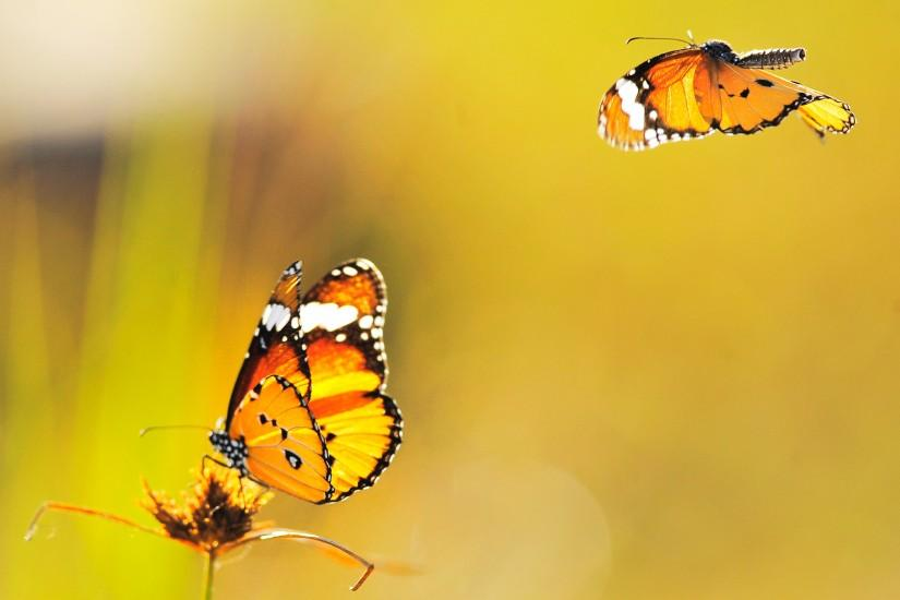 butterfly background 2560x1800 for mac