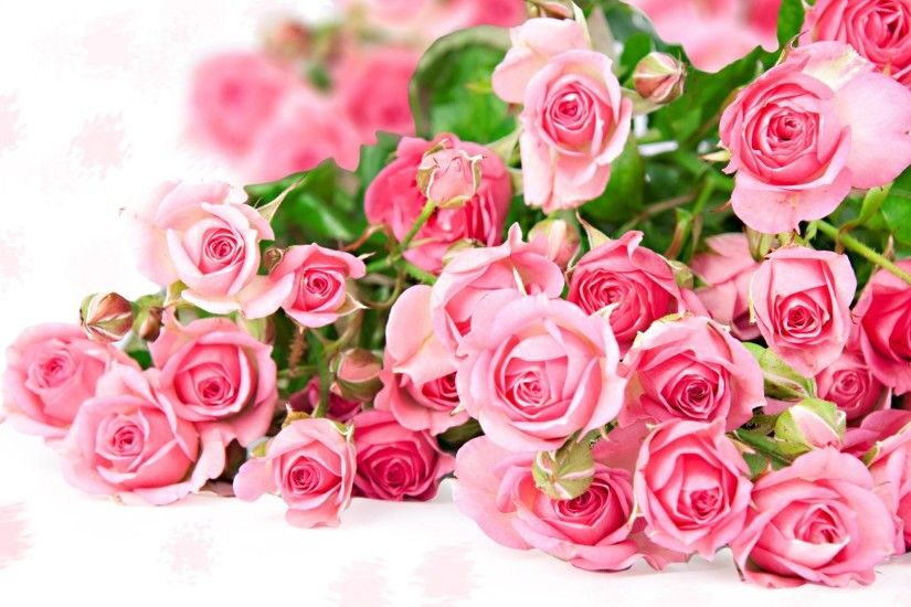 Pink-Roses-HD-Wallpapers