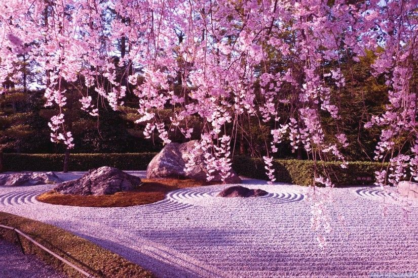 Japanese Cherry Blossom Garden Wallpaperwallpapers Sakura Nature Path Grass Cherry  Blossom Free Hd Rz R Piu