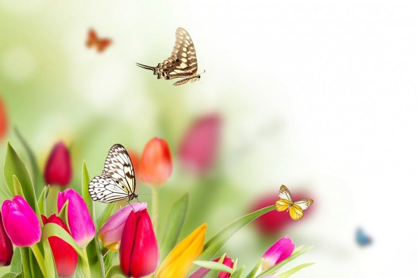 Spring Flowers And Butterflies background HD