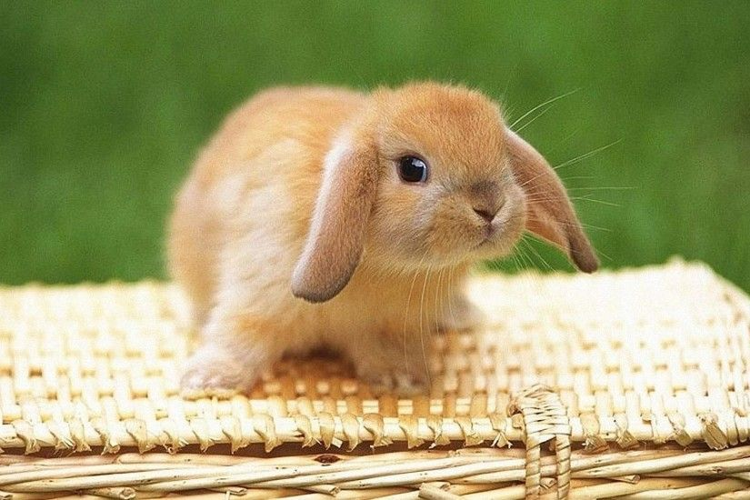 25 Best Ideas about Baby Bunnies on Pinterest | Cute bunny, Bunny .