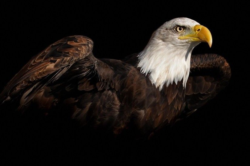 Eagle, Ready, To, Flying, High, Resolution, Wallpaper, Download, Flying,  Eagle, Images, Free, Download Wallpaper, Hd Images, Colorful, 1920×1080  Wallpaper ...