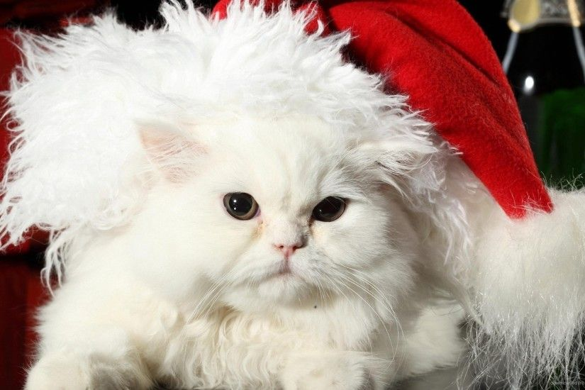 White Christmas Cat for 1920x1080