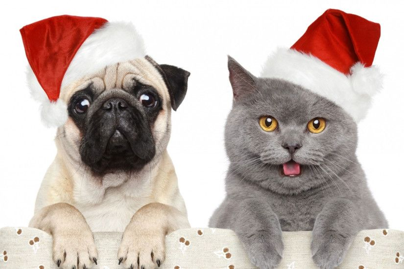 hd pics photos christmas dog cat friends pug hd quality desktop background  wallpaper