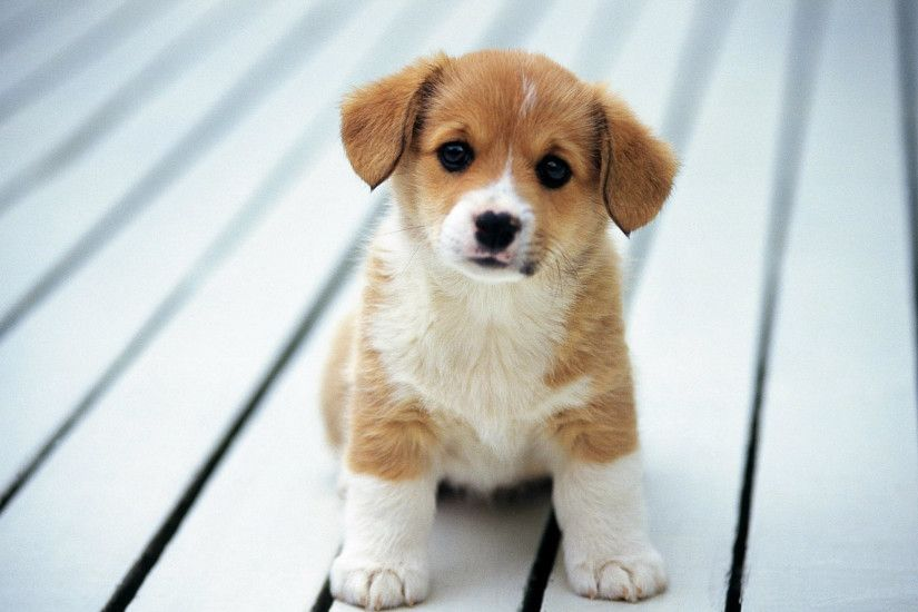 50 Free HD Dog Wallpapers Cute ...