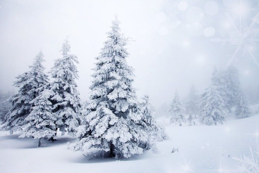 winter snow christmas tree spruce tree nature landscape background  snowflakes bokeh