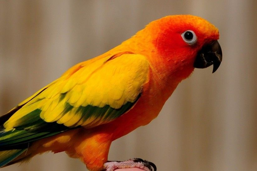 Parrot bird wildlife macaw parakeet beak tropical zoo animal HD wallpaper.  Android wallpapers for free.