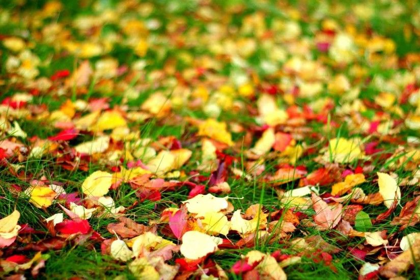 Leaves Autumn Foliage Fall Top HD Nature Wallpaper Download