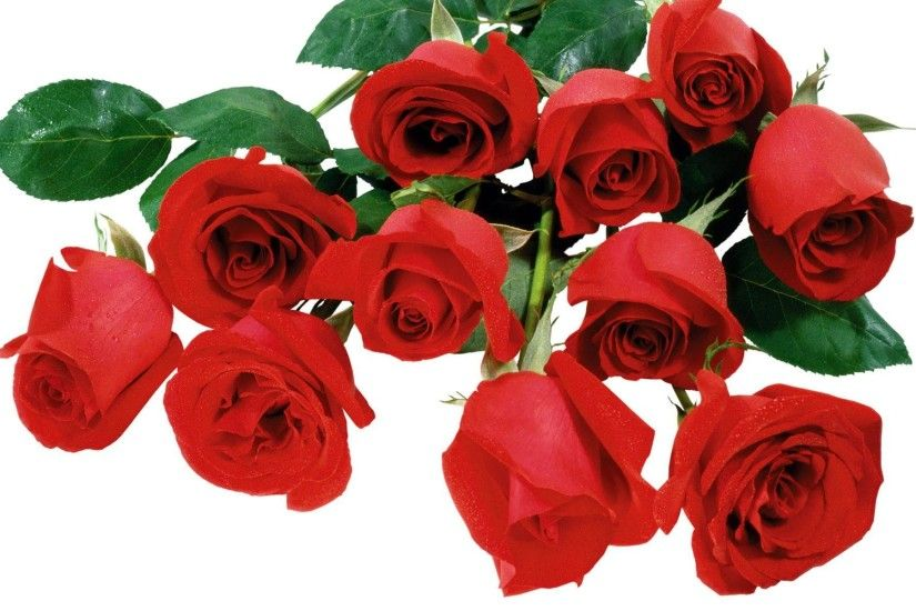 Wallpapers For > Red Rose Wallpaper Desktop
