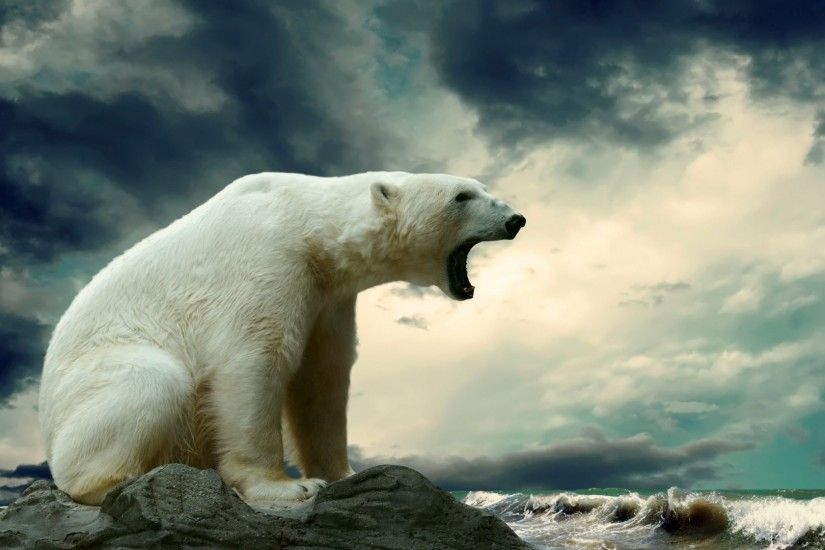 Preview wallpaper polar bear, sitting, thick 1920x1080